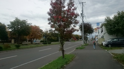 DSC_2533.JPG